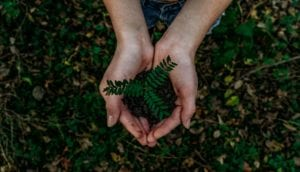 hands holding plant for Eco-benign® blog